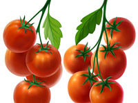 Tomate, Rot, Red, Tomatoes, Green, Grün, Branch, Ast, Zweig, Illustration